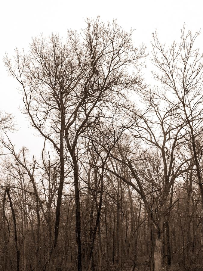 Missouri timber. A rainy day view of NE Missouri timber and trees highlighted in the gray sky royalty free stock photography