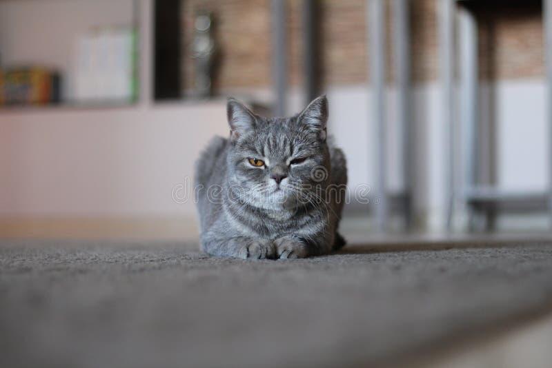 Misstrauische Katze stockfotos