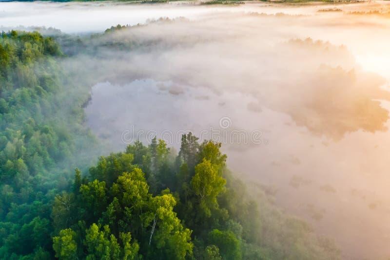 Mist över blandad skog på soluppgång, flyg- landskap Temperaturkontrastbegrepp dimmig morgon royaltyfri bild