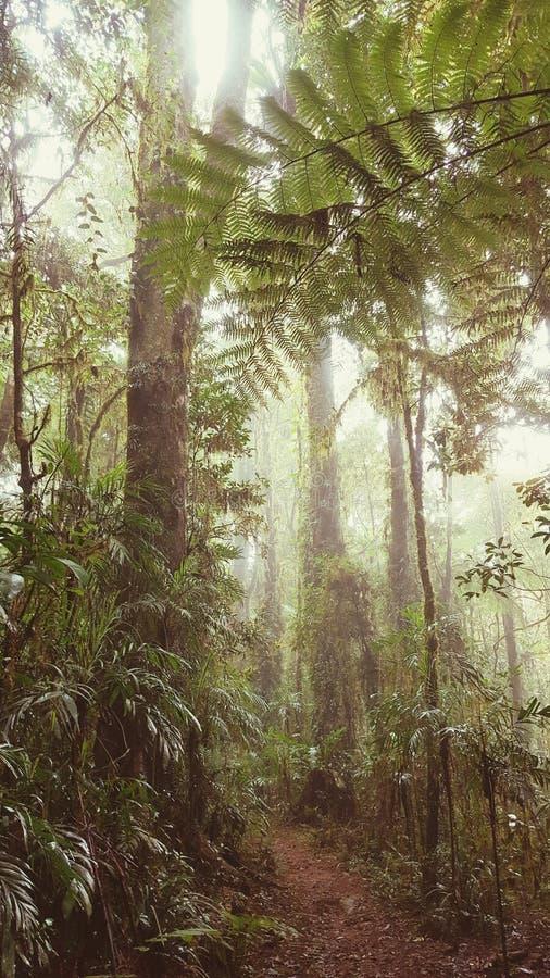 Mist över en gå bana i en grön rainforest arkivbilder