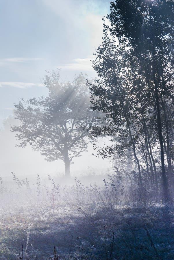 Download Mist stock photo. Image of mystic, blue, light, autumn - 19206644
