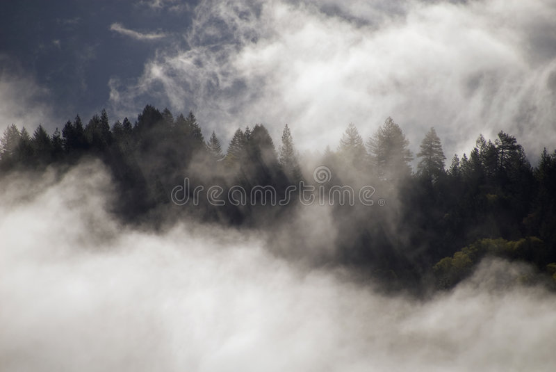 Download Mist above the forest stock image. Image of morning, beginning - 7864201