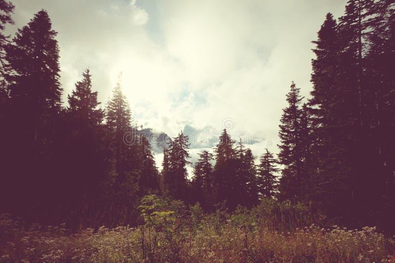 Mist in bergen royalty-vrije stock afbeeldingen