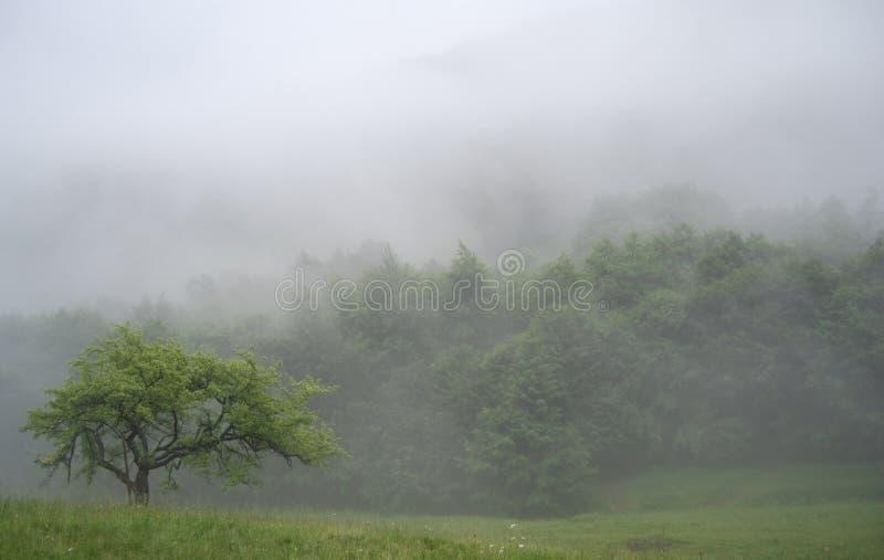 Mist in bergen royalty-vrije stock foto