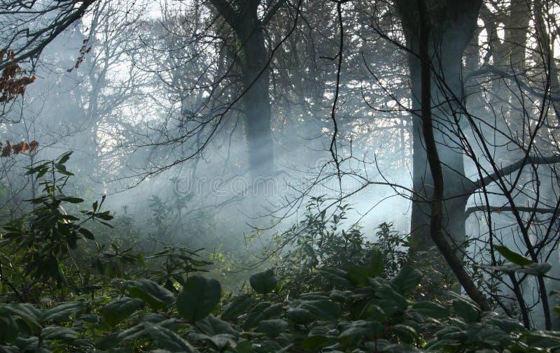 Mist in bossen stock foto's