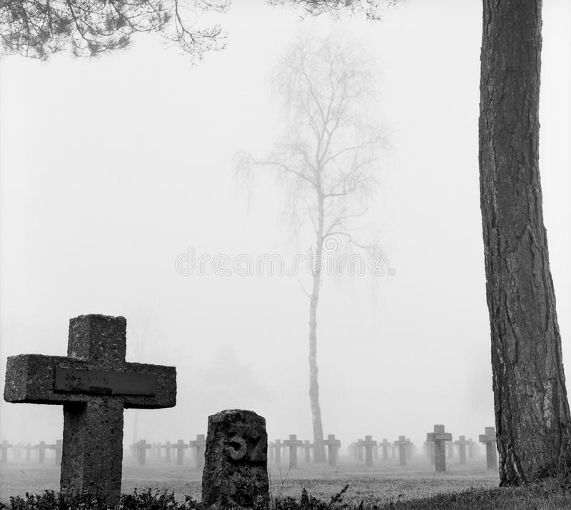 Mist at cemetery gravestone cross pine trees park royalty free stock image
