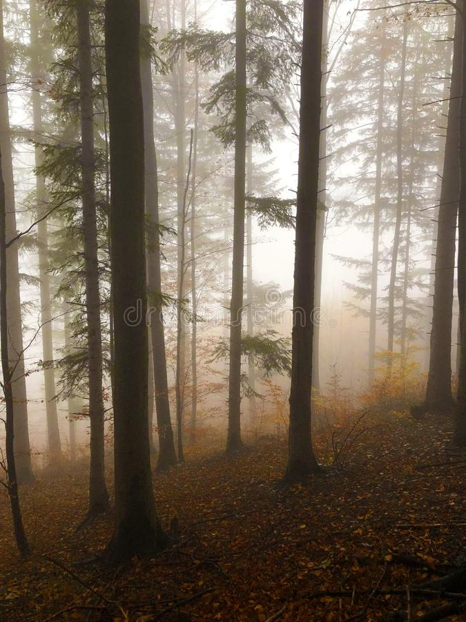 The mist in the colorful autumn forest royalty free stock photography