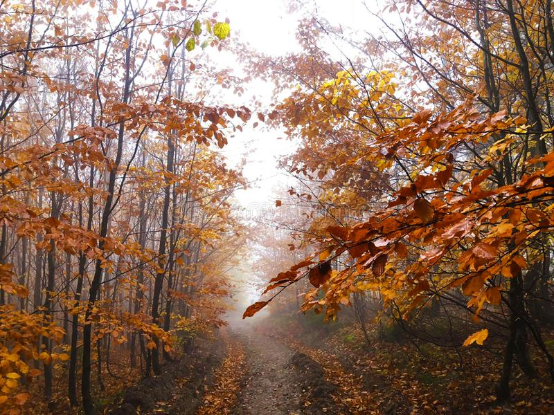 The mist in the colorful autumn forest stock photography