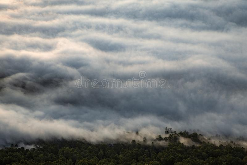 Mist cover forest royalty free stock image