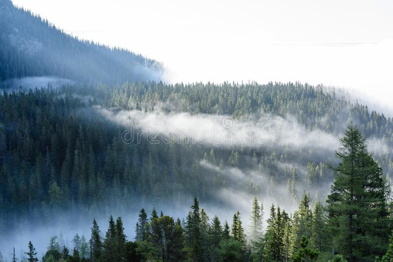 Mist covered mountains with forests. Mist covered mountains with forest trees and blue sky and tourist trails in slovakia royalty free stock photos