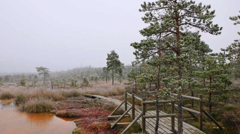 Mist in de sleep van het de wintermoeras met zwavelvijver royalty-vrije stock afbeelding