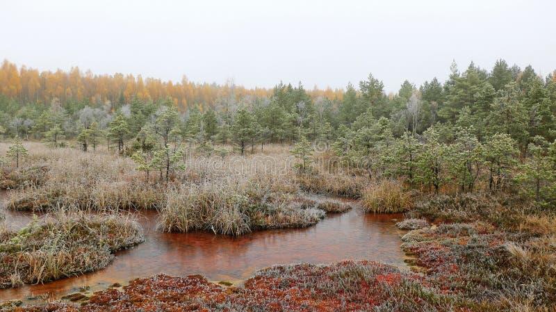 Mist in de sleep van het de wintermoeras met zwavelvijver royalty-vrije stock afbeeldingen