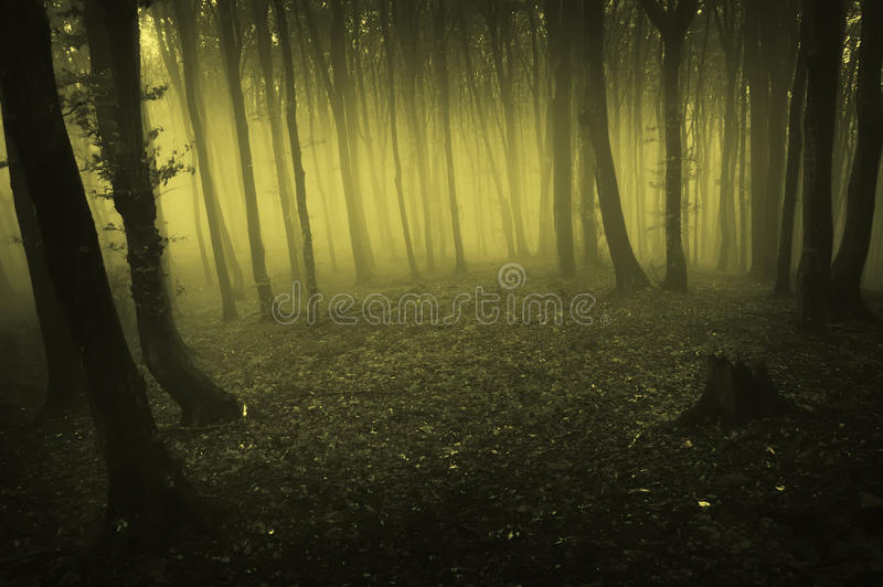 Mist die in donker bos bij ochtend toeneemt royalty-vrije stock afbeelding
