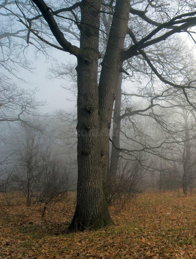 Mist in donker bos stock afbeelding