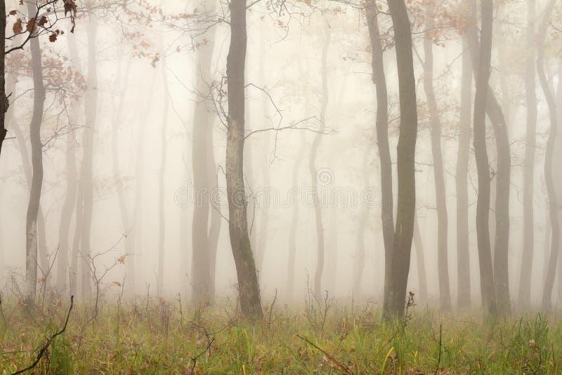 Mist door de bomen stock foto's