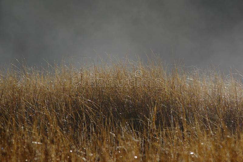 Dewy plants in the mist. Mist of early morning and dewy plants royalty free stock images