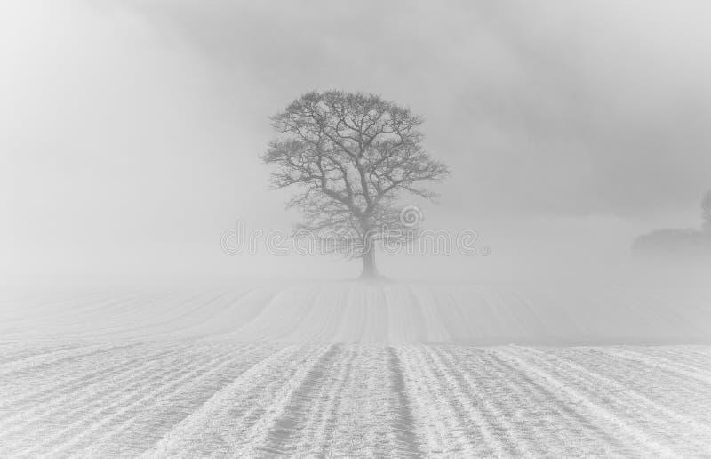 Mist en sneeuw stock foto