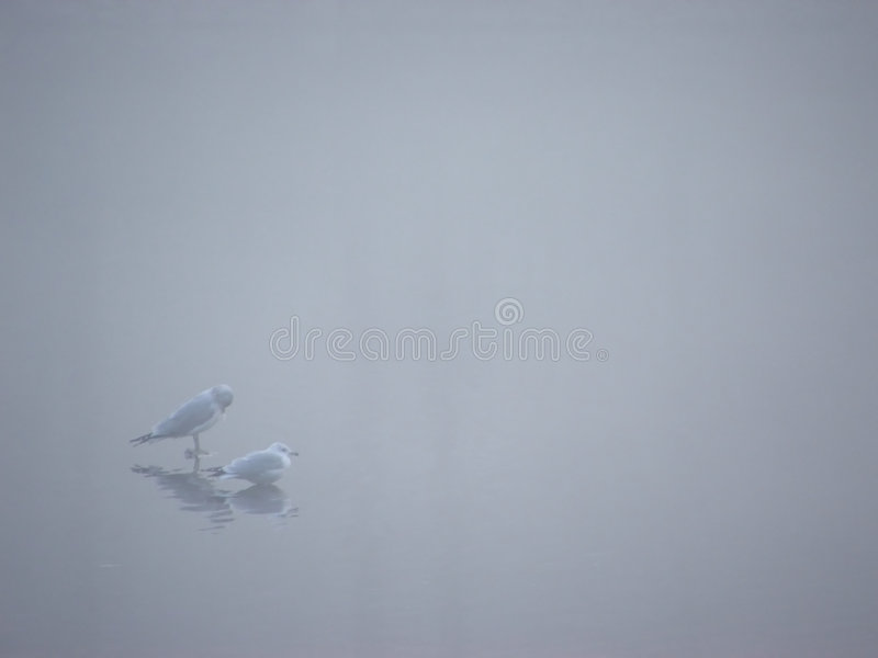 mist för fåglar iii arkivfoto