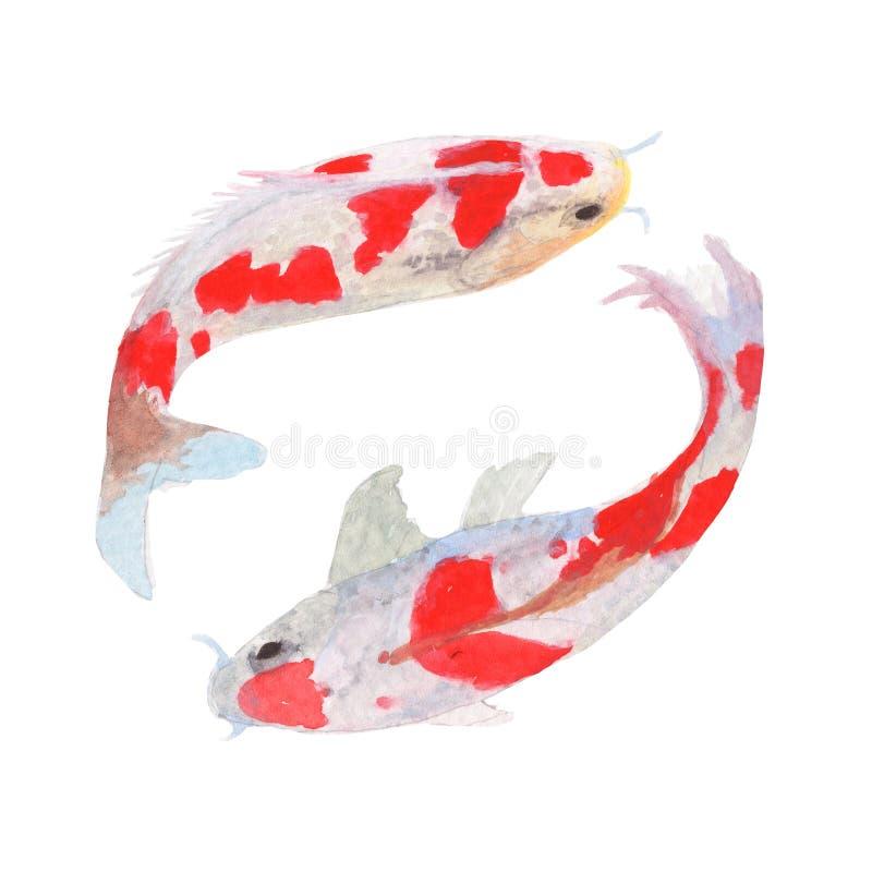Mist-Fisch-Aquarellmalerei lokalisiert Aquarell-handgemalte Mistfischillustrationen Mistfische lokalisiert auf weißem Hintergrund stockbild