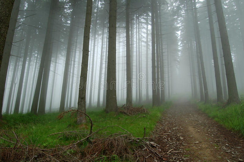 Mist in the forest royalty free stock photos