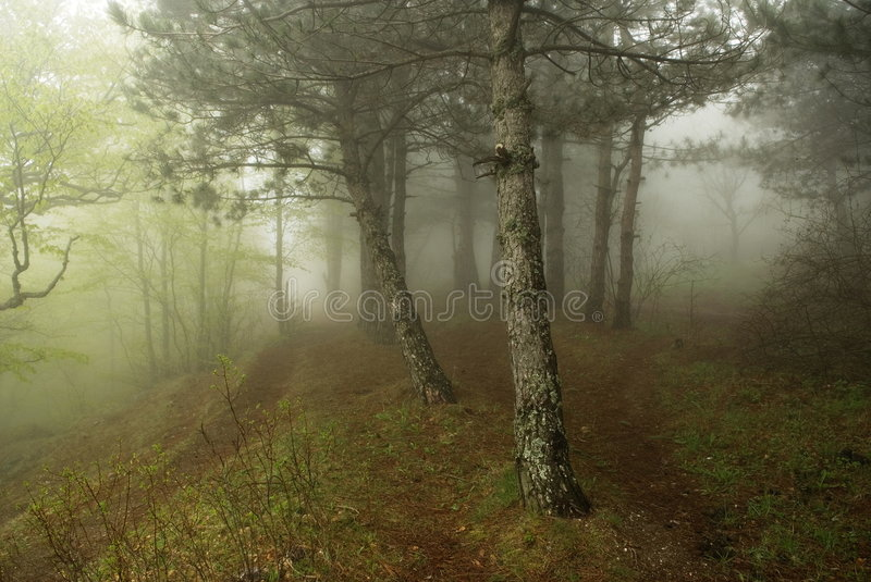 Download Mist in the forest stock photo. Image of footpath, forest - 5495048