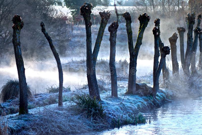 Mist and frost eerie trees and water. Eerie trees by water on misty frosty winter morning stock photography