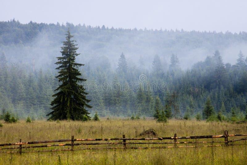 Mist in het bergbos royalty-vrije stock afbeeldingen