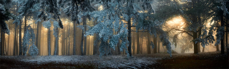 Mist in het bos royalty-vrije stock fotografie