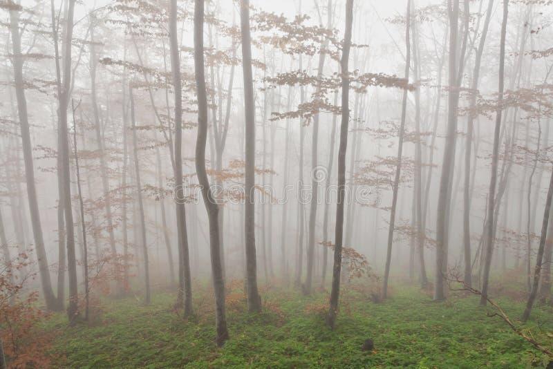 Mist in het bos royalty-vrije stock afbeelding