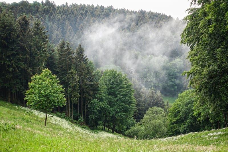 Mist in het hout in het Eifel-gebied in Duitsland stock foto