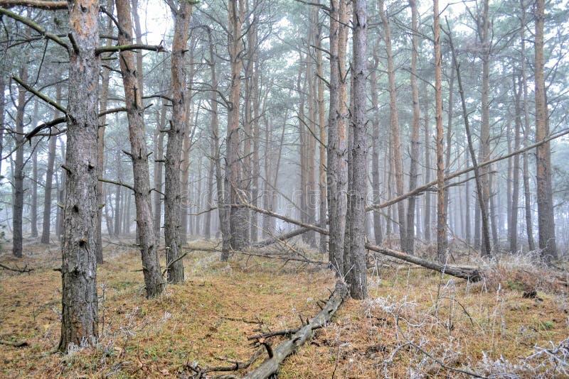 Mist in het oude bos royalty-vrije stock fotografie