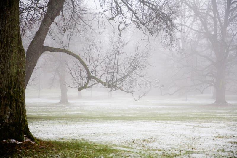 Mist in het park royalty-vrije stock afbeeldingen