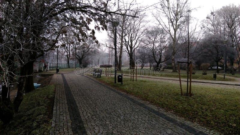 Mist in het park in de koude de herfstochtend royalty-vrije stock afbeeldingen
