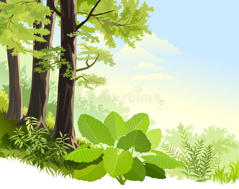 Mist in het regenwoud van Amazonië royalty-vrije illustratie