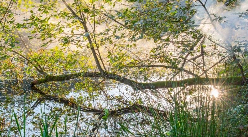 Mist i scenisk gryning för natur arkivbild
