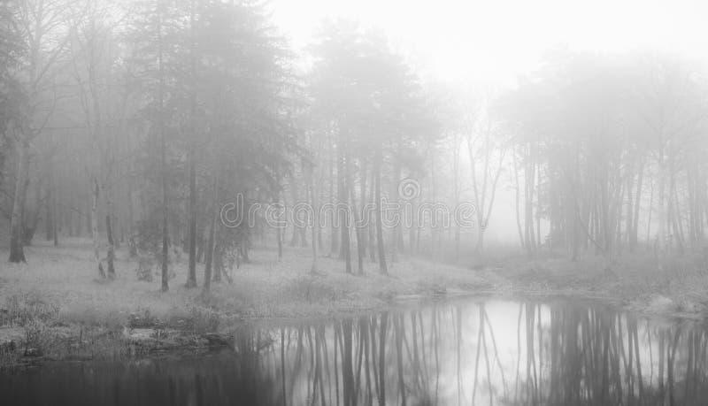 Mist i skog arkivfoton