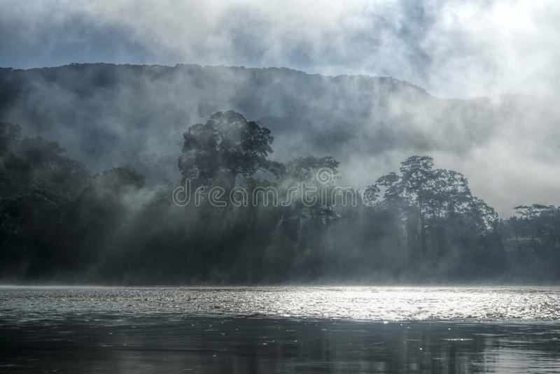 Mist in jungle royalty free stock photo