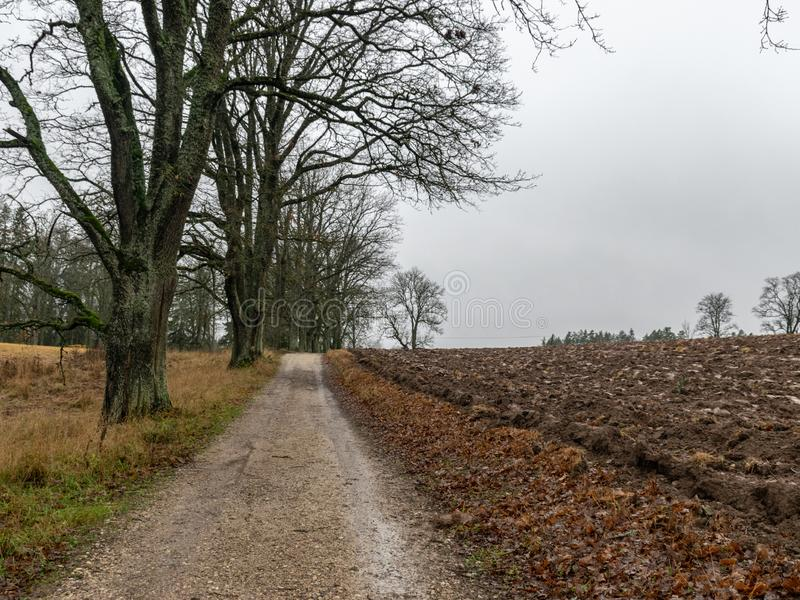 Landscape with wet and dirty country road, naked tree silhouettes, rainy and misty autumn day stock photos