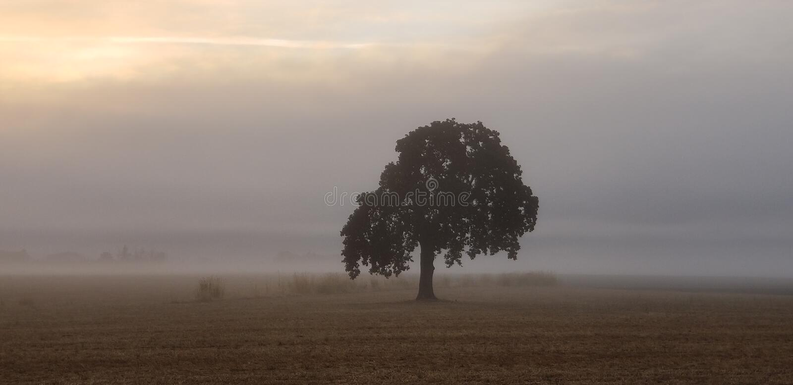 Mist in the Morning royalty free stock images
