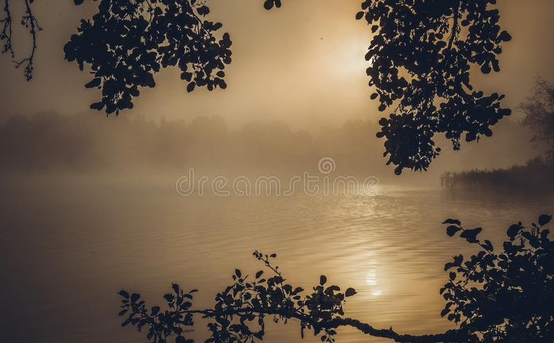 Mist near lake and forest stock photography