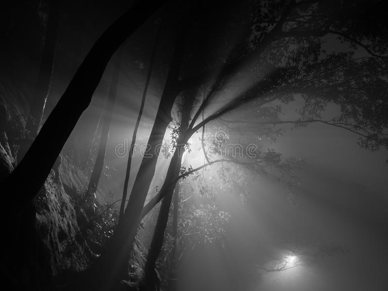 Mist Night in Hong Kong. Light Night Fear Dark Mystery Concept royalty free stock images