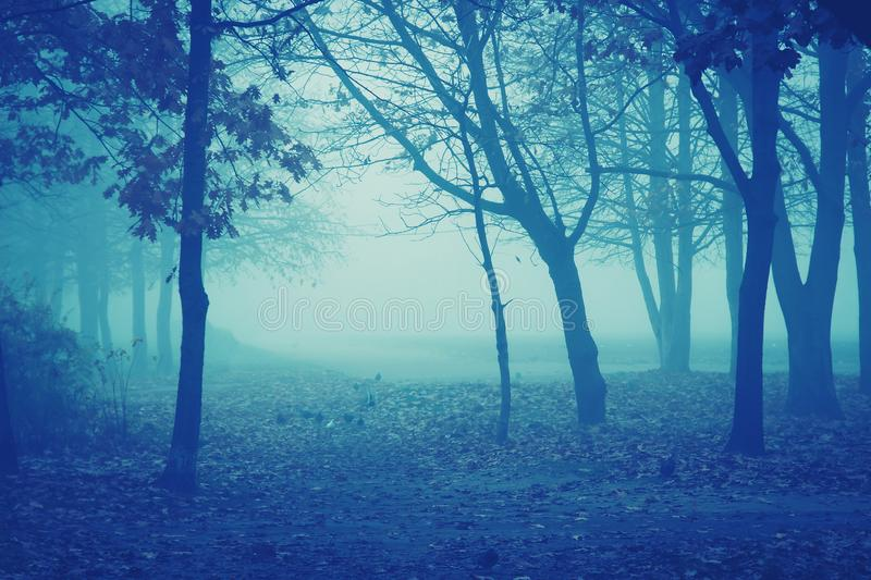 Mist night weather in park royalty free stock photo