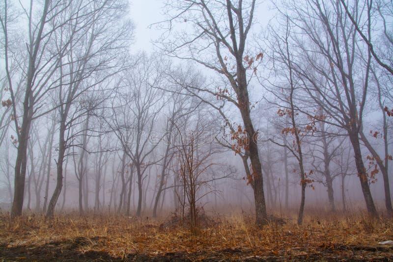 Mist onder de bomen royalty-vrije stock afbeelding
