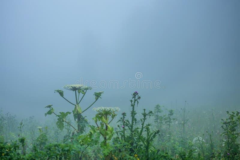 Mist op bosopen plek royalty-vrije stock foto