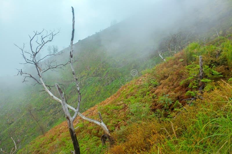 Mist op de Helling van een Tropische Berg stock foto