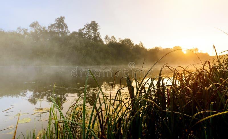 Mist op de rivier bij zonsopgang stock foto's