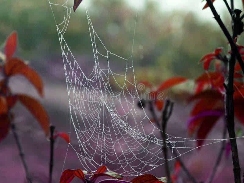 Mist op spiderweb op sprong en boom op een vroege de winterochtend stock foto's