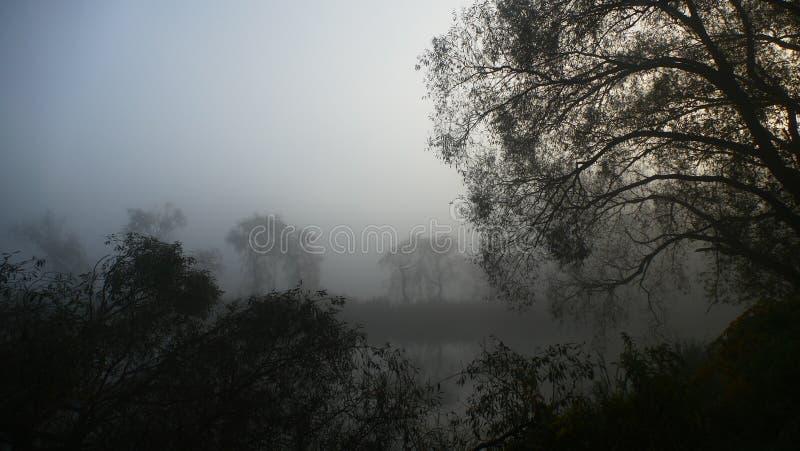Mist over de vijver Vroege ochtend stock foto's