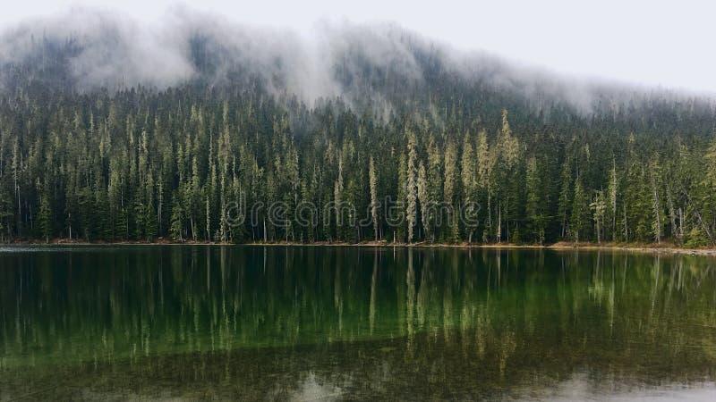 Mist over het bos rond het bergmeer royalty-vrije stock afbeelding
