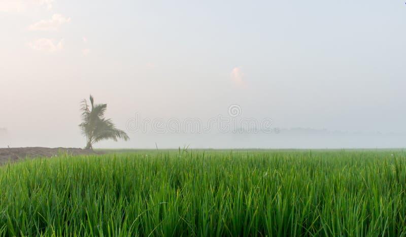 Mist over rijstlandbouwbedrijf royalty-vrije stock fotografie